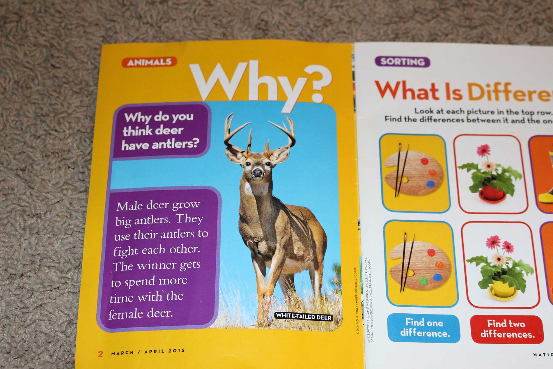 Whitetail Facts